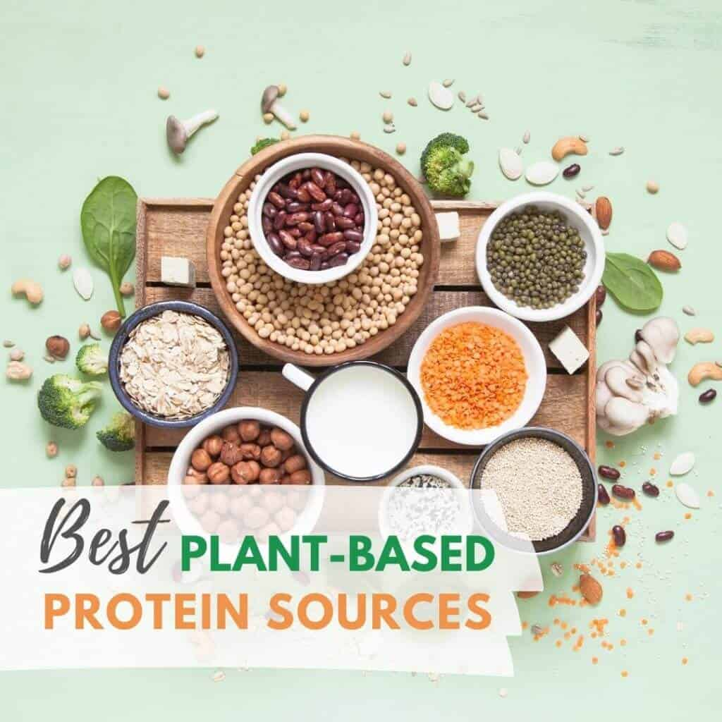 Best Plant Protein Sources 1