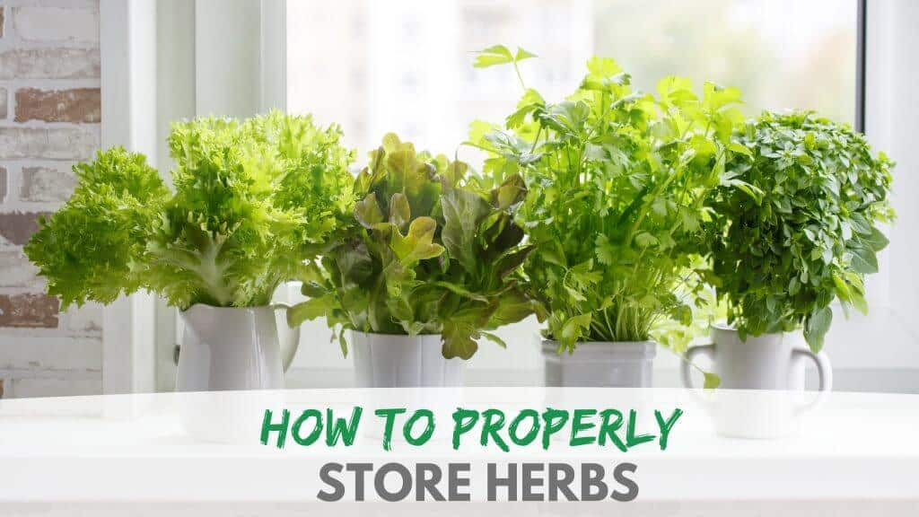 How to Properly Store Herbs