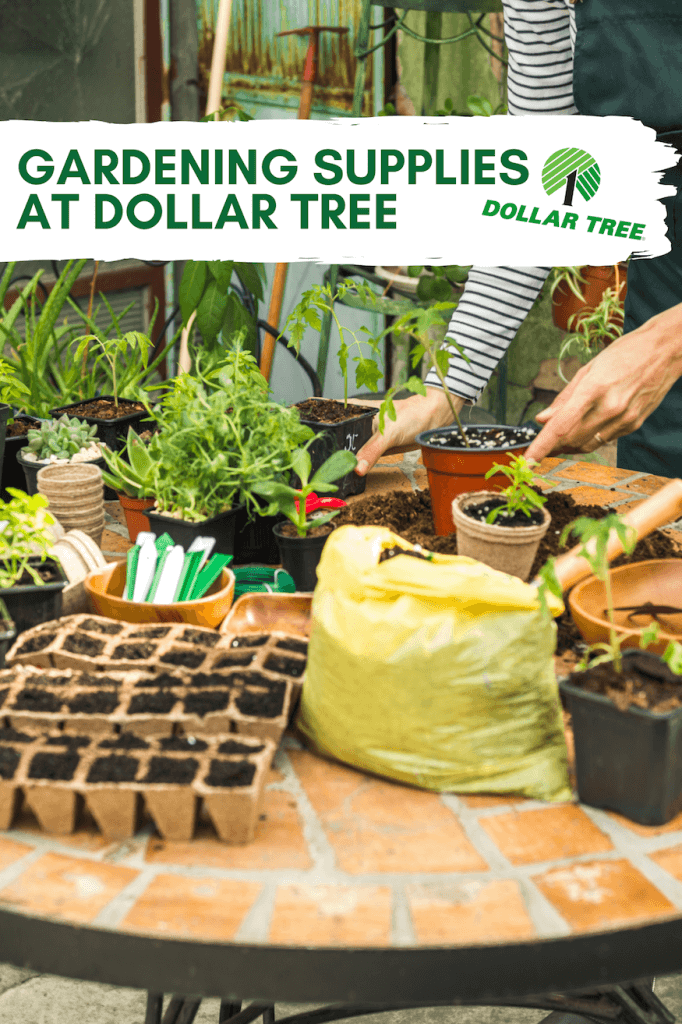 Gardening supplies from Dollar Tree can get your garden started.