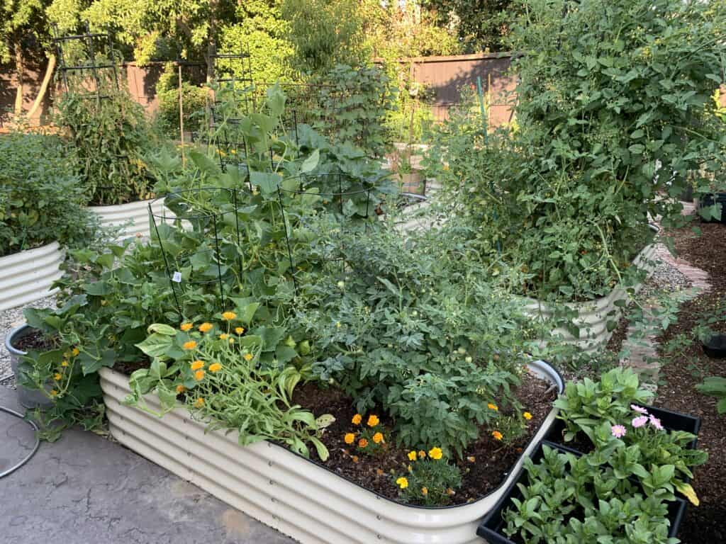 multiple garden beds with various growth and pathway stones shown