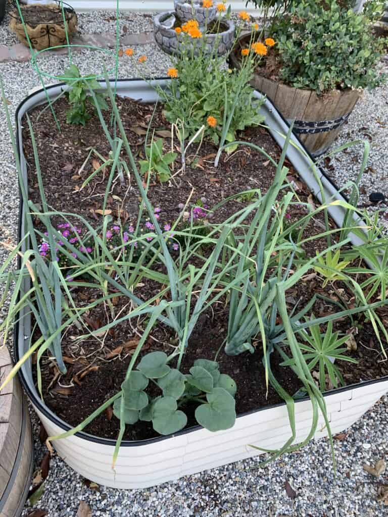 garden bed with various growth